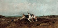 Hounds finding